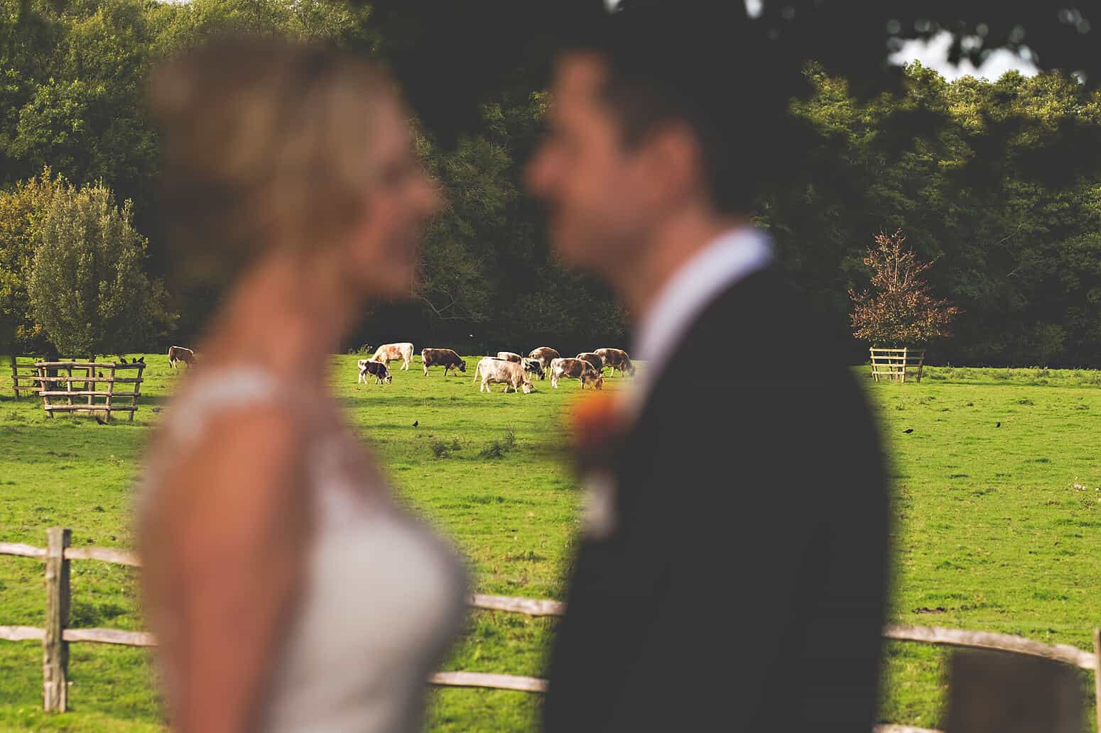 Wedding couple with cows at Gate Street Barn